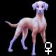 Pet 10468055