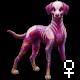 Pet 1618419