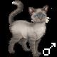 Pet 1651573